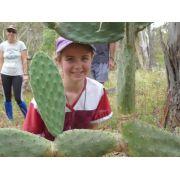 Peeping through jumping cactus